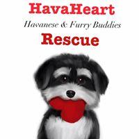 Hava Heart Rescue