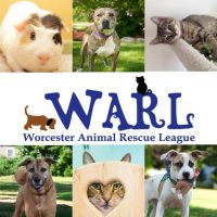 WARL (Worcester Animal Rescue League)
